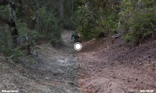 prizm trail